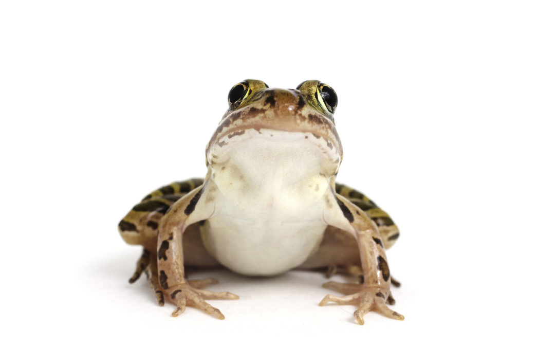 Are You a 'Frog in a Well'?
